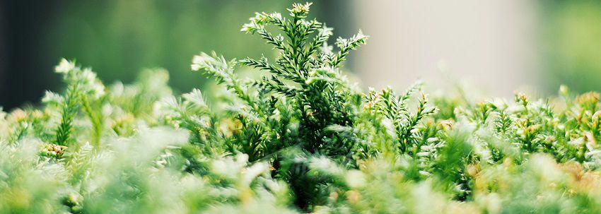 Consigli e idee per l 39 orto in giardino - L orto in giardino ...